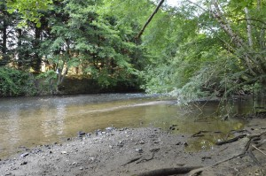 The River Lisle at the bottom of the garden